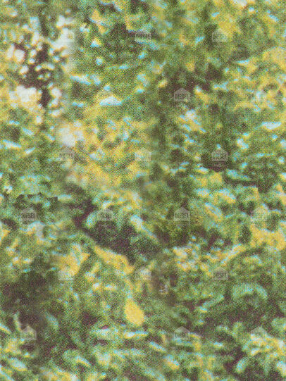Diesel - FOREST CAMO,  - Wallpapers - Image 1